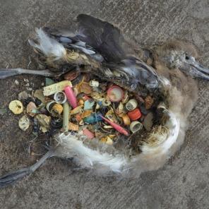 plastic-bird